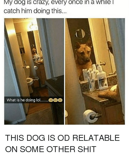 Dogs Memes and What Is My dog is crazy every once in