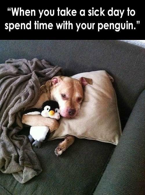 dogsfunnypitbulls Humor that I love Pinterest