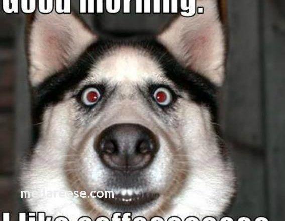 Funny Good Morning In Telugu Morning quotes best of morning quotes good morning telugu