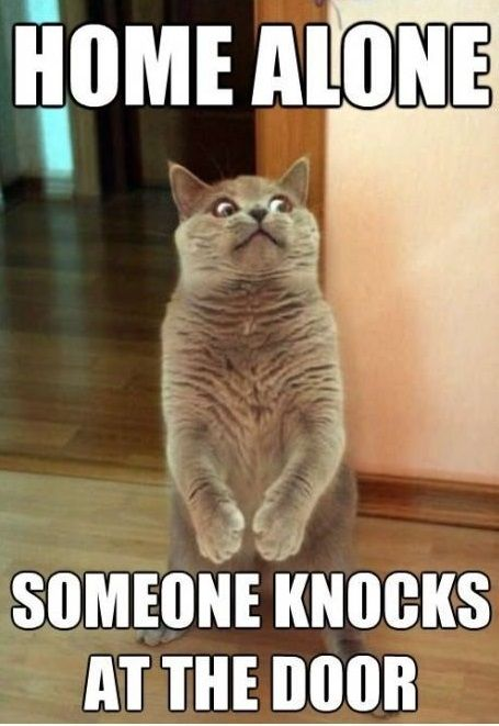 Home alone funny cat meme