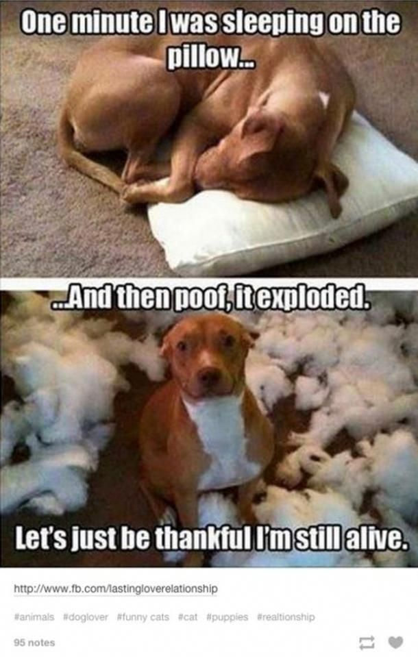 50 Hilarious And Relatable Dog Memes For National Dog Day animalmemes