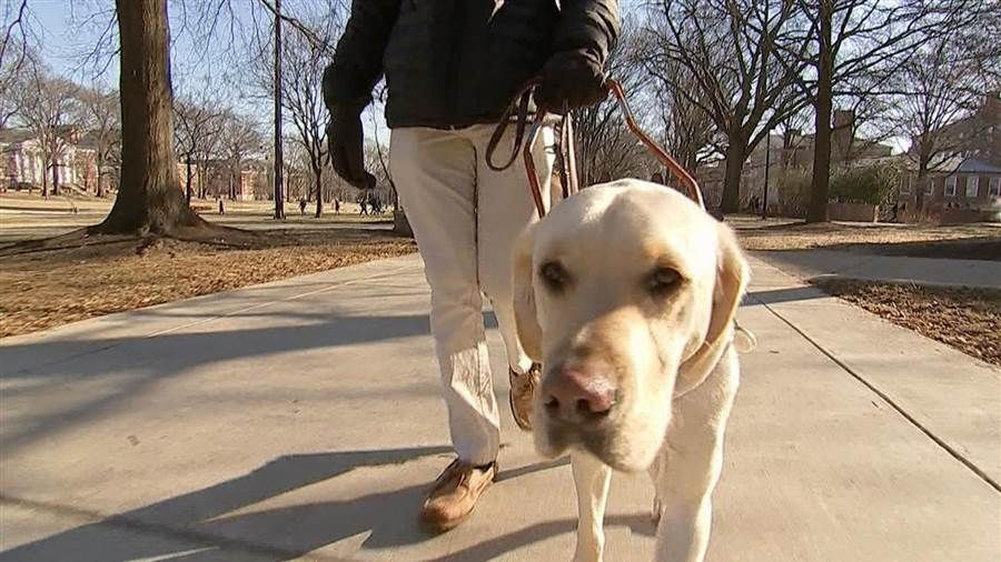 How guide dogs changed 2 peoples lives for the better