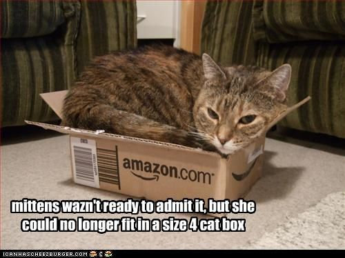 Grasp the Stunning Funny Cat Pictures In Boxes