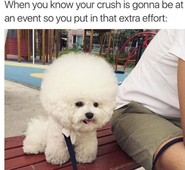 Image result for super extra cute dogs