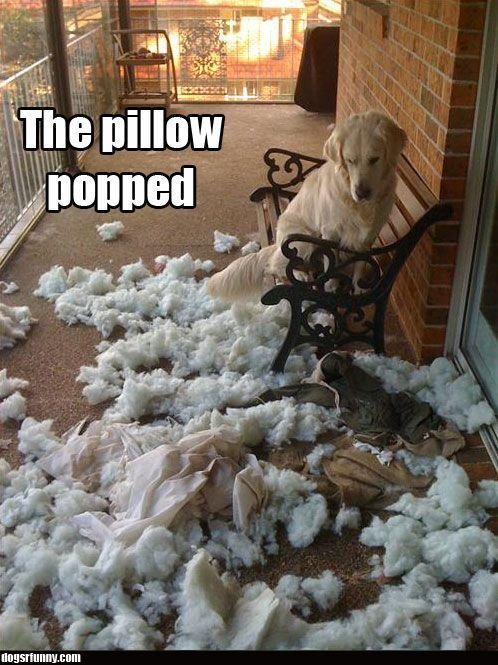 Exactly why my dog and my patio chair pads can not be left alone