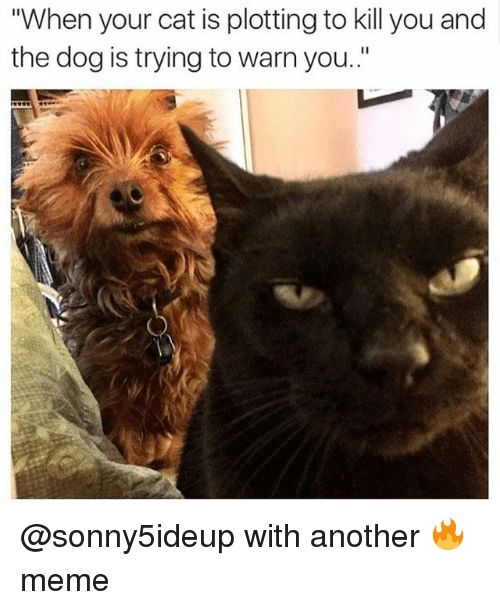 """Cats Dogs and Funny """"When your cat is plotting to kill you"""