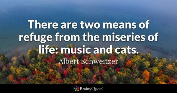 There are two means of refuge from the miseries of life music and cats