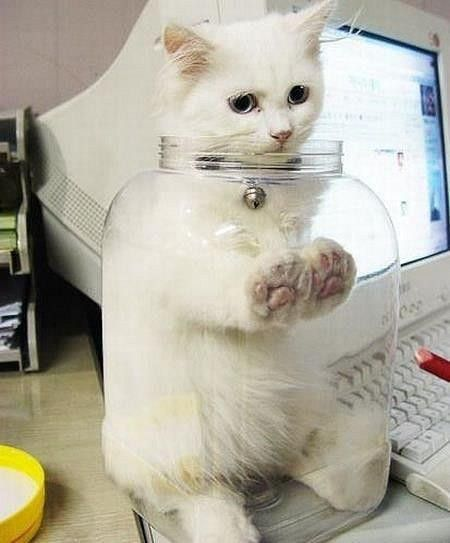 Funny Cats 05