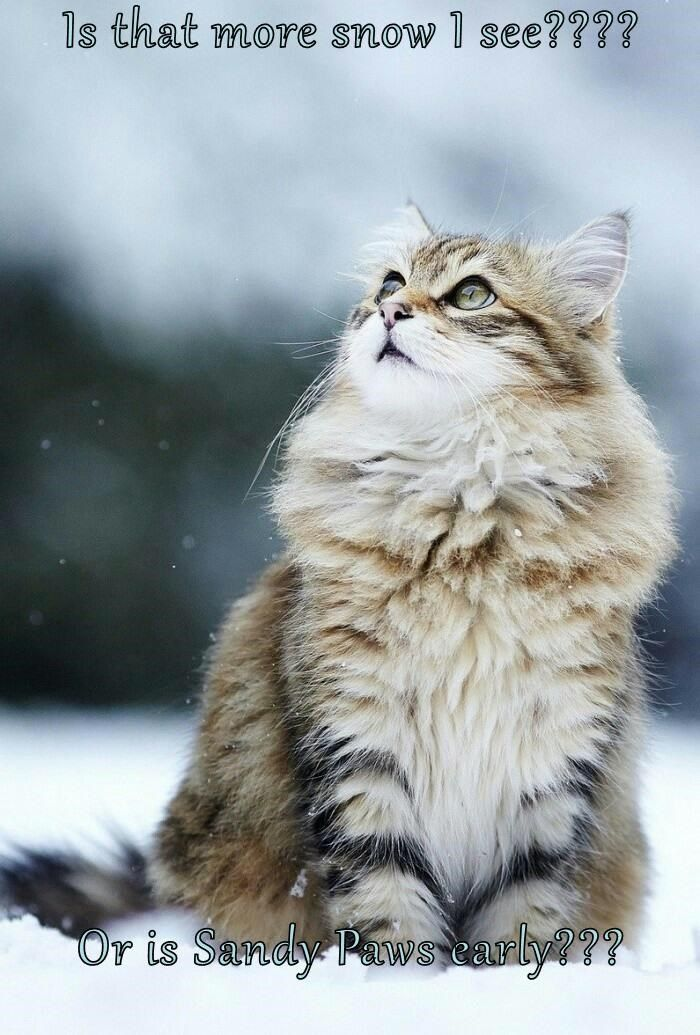 Grasp the Suprising Funny Cat Pictures Snow Paws