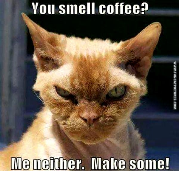 funny cat pictures in need of coffee