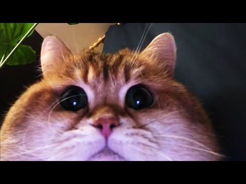 Animals ▷ 😸TRY NOT TO LAUGH 😸 Funny Cat and Dog Videos ❤