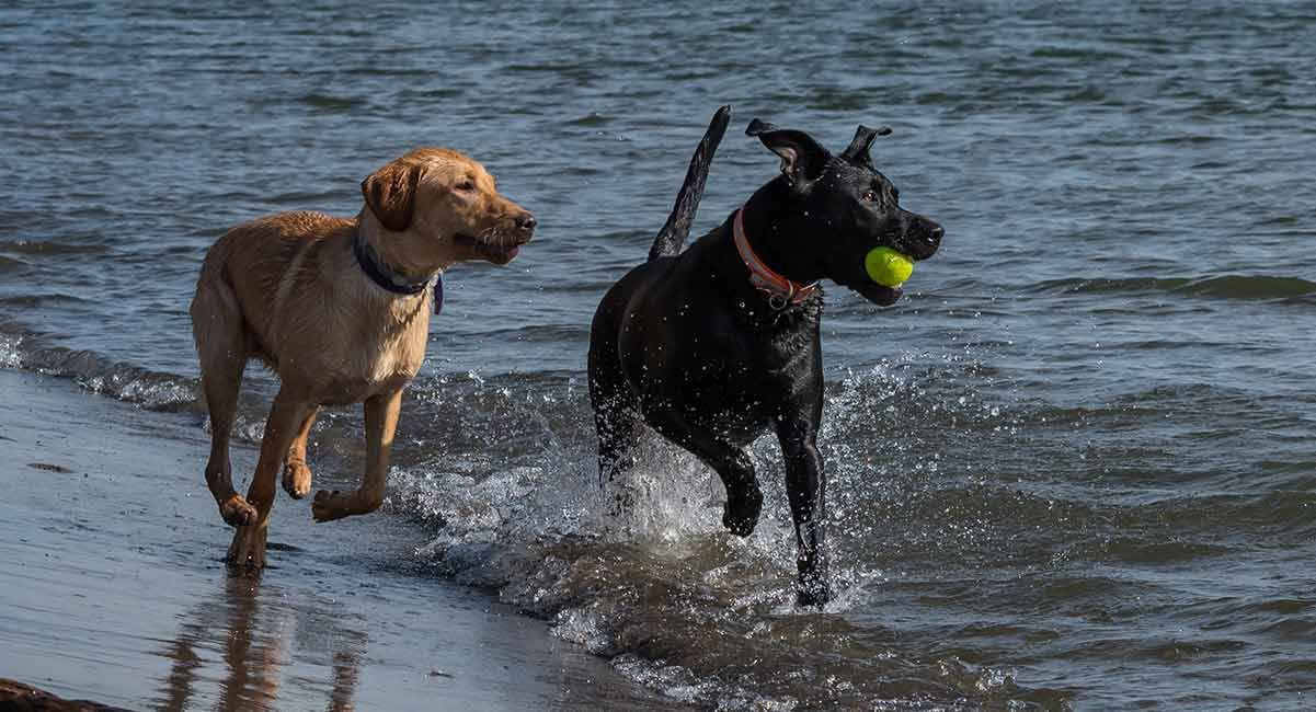 Should I a second dog Do two dogs have more fun