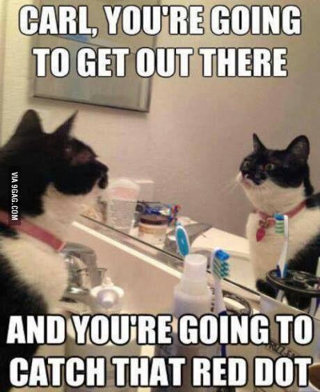 Cat Pre game self Pep Talk