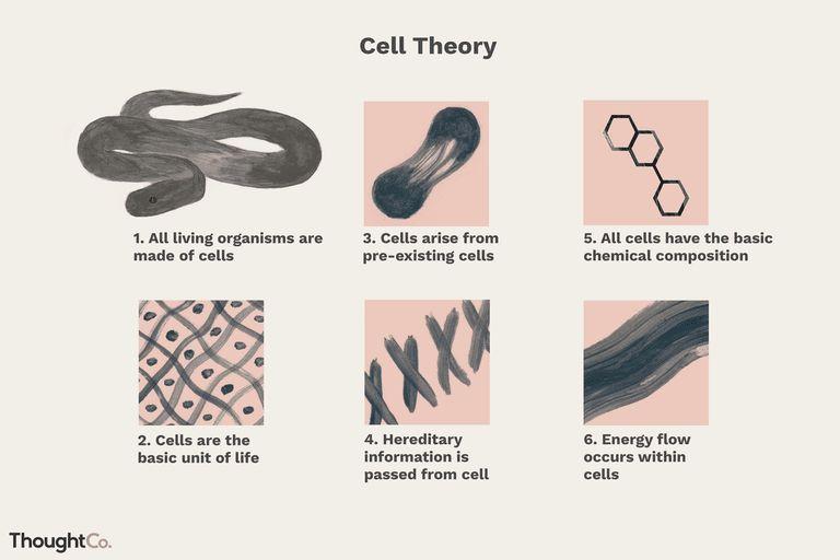 TC cell theory 5ac ff1b db92