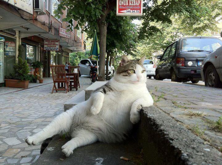 Big Fat Cat Boss