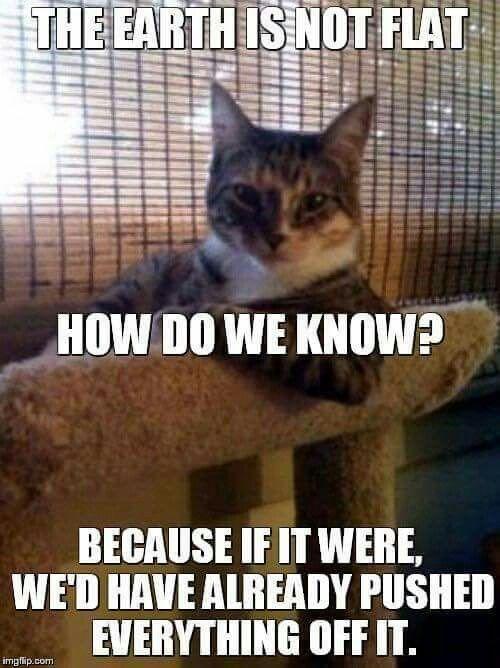Funny Cat Memes Funny Pics Funniest Memes Memes Chistosisimos Funny Animal