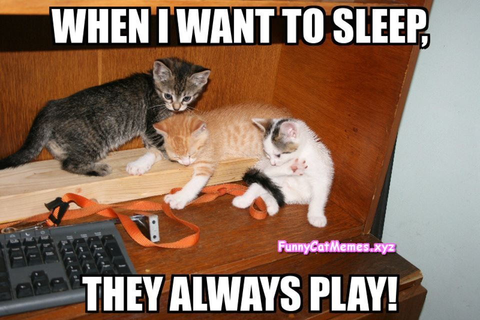 Cat meme Funny Cat Memes Funny Kitten Memes Kitten meme Sleeping kitten meme funnycatmemesxyz tumblr