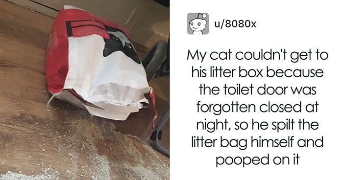 After Finding The Toilet Door Locked At Night A Cat Split Open A Litter Bag To Poop And People Responded With Hilarious Poem And ments
