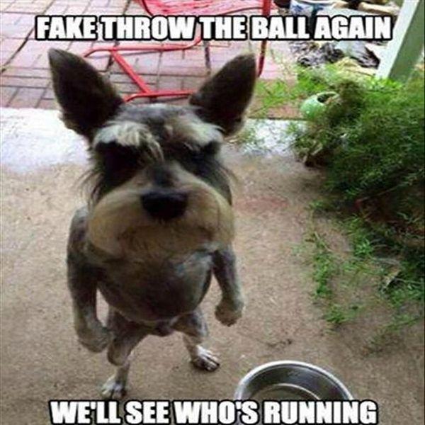 23 Re y Funny Dog Memes 3