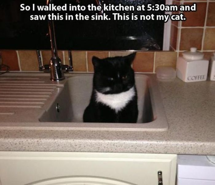 These Cats Give New Meaning To The Words Cat Burglar