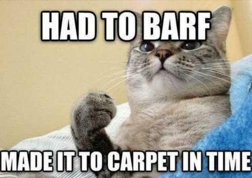 Cat memes funny