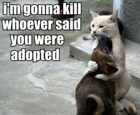 I m gonna kill whoever said you were Adopted