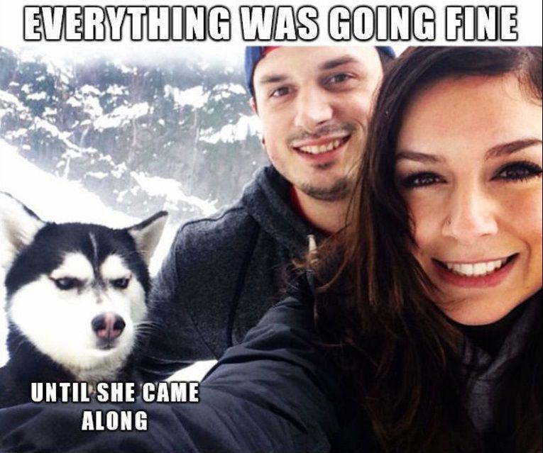 Jealous husky meme