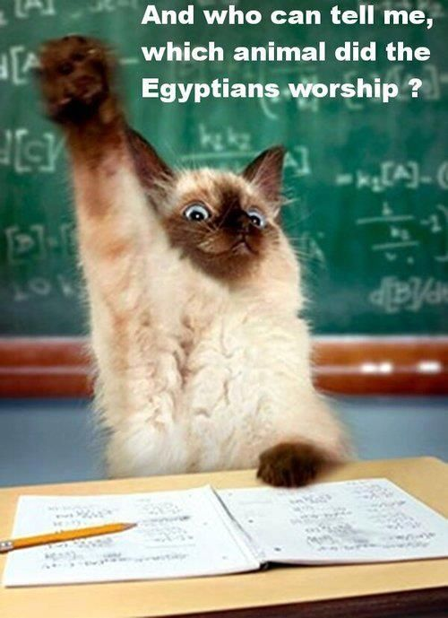 Funny cat Pick me Pick me Animal With Captions Pinterest
