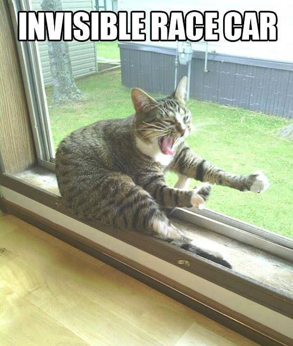 Funny cat Invisible race car