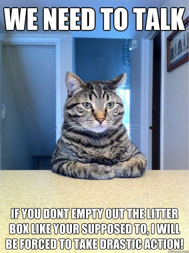 Grasp the Unique Funny Pictures Of Cat Littering On Dinner Table