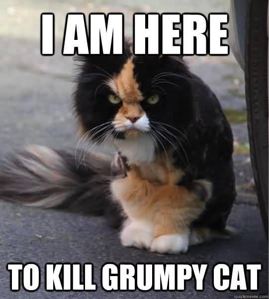 I am here to kill grumpy cat Cat Meme Picture