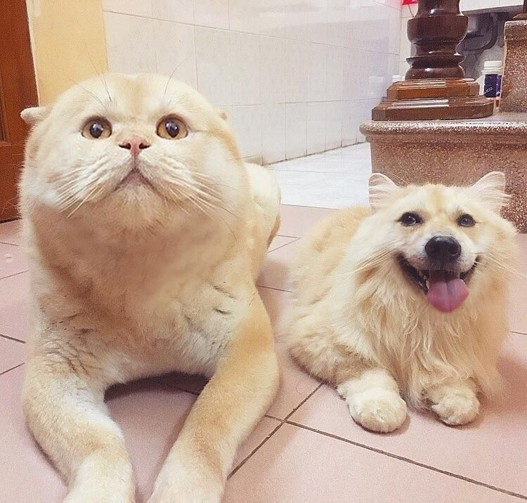I just faceswapped my dog and my cat