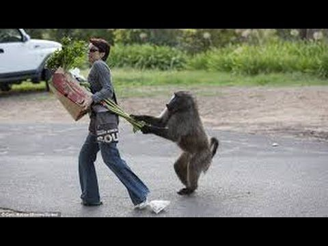 Funny Monkeys Stealing Things pilation July 2014