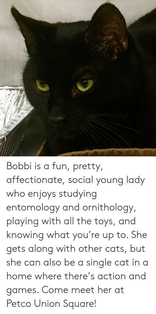 Grasp the Wonderful Funny Dark Cat Memes