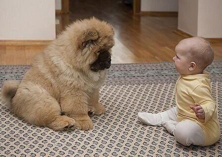 Dog & baby stare contest