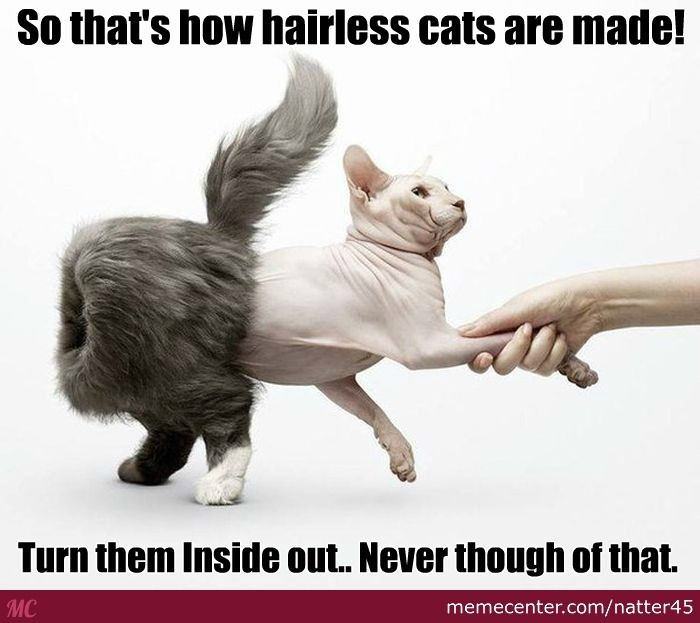 Hairless Cats Are Inside Out Cats