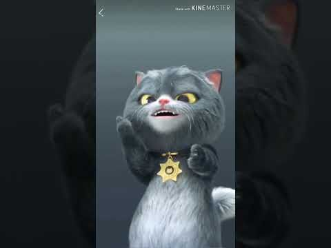 Funny CAT sniper A funny video with a cat