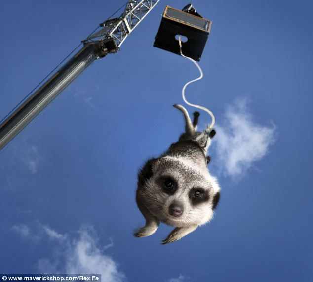 Flying squirrel By February this brave Maverick is hurtling through the air performing a