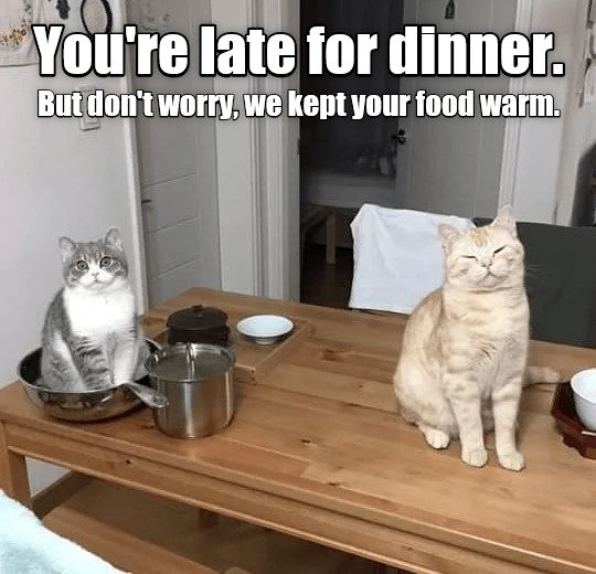 Funny picture and meme of cats keeping your food warm for you out of the kindness