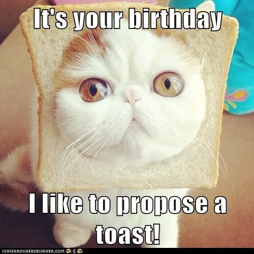 birthday toast cheers inbread Cats captions pun