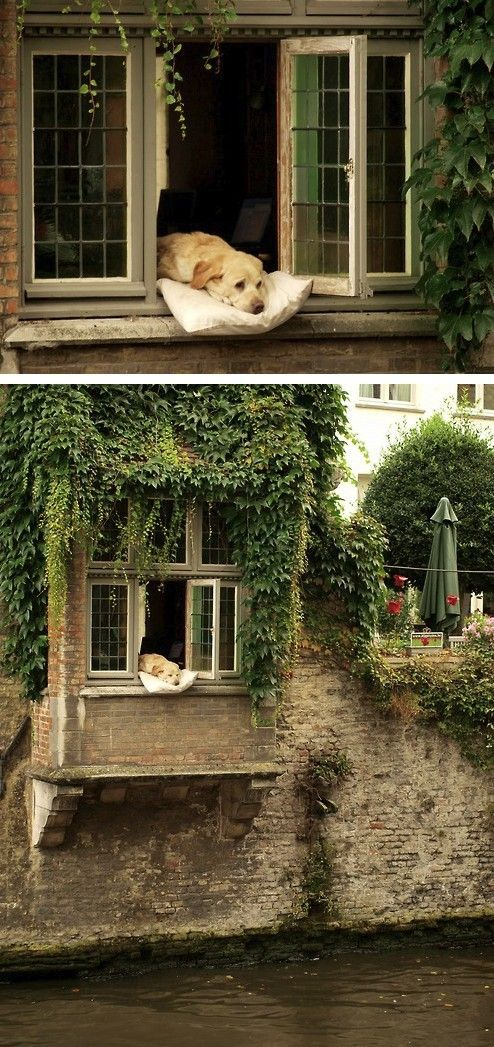 This is in Bruges Belgium and we ve seen this window and dog as we were in a boat on the river so cute