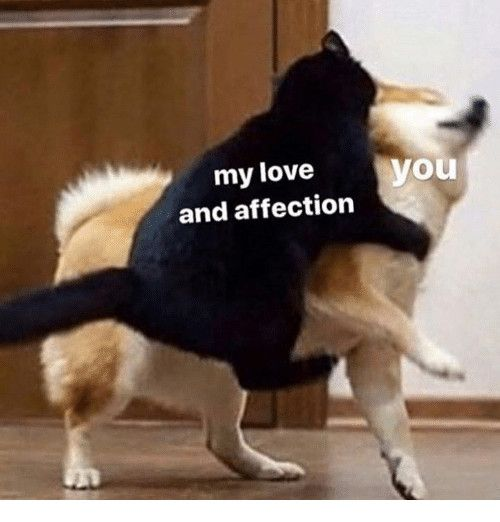 My Love And Affection Youi Love You Meme Funny
