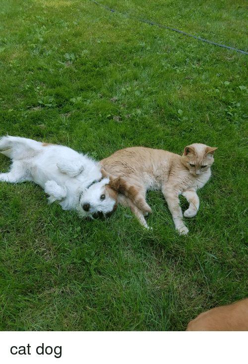 Dog Cat and Cat Dog