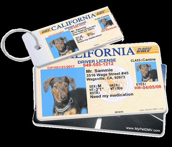 View Our Custom Pet ID Tags