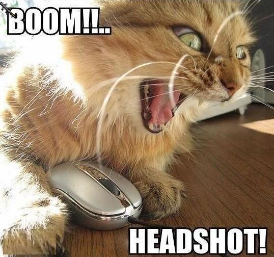 funny angry gamer cat