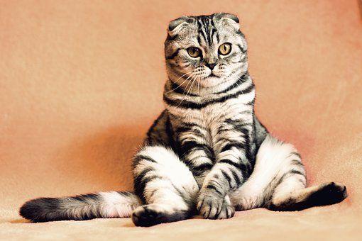 Cat Kitten Pets Animals Housecat