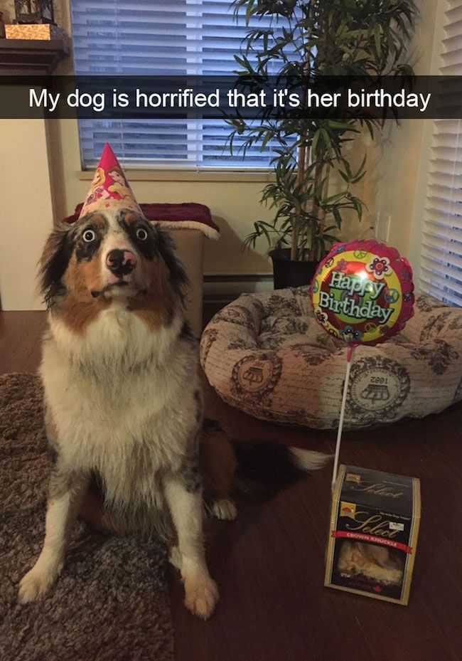 RuinMyWeek funny pictures photos pics humor edy hilarious dog cute dogs snapchat