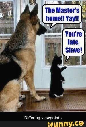 Best 50 Funny Dogs VS Cats Memes To Prove Who s Boss