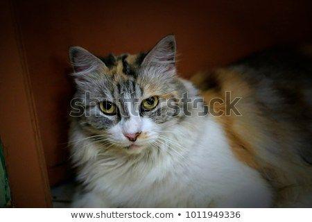 Beautiful Cat Pussy my beautiful funny cat