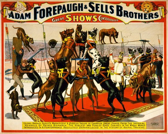 Champion great danes from the Imperial kennels poster for Forepaugh and Sells Brothers 1898